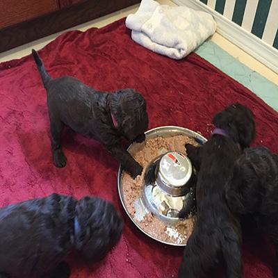 Week Four. Puppy mash